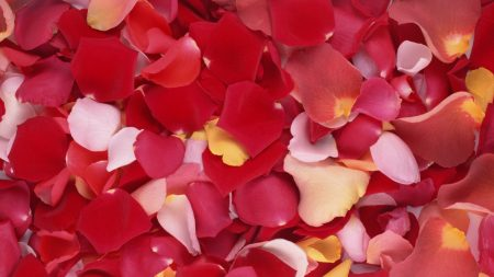 Download wallpaper 1920x1080 line equalizer multi for Multi colored rose petals