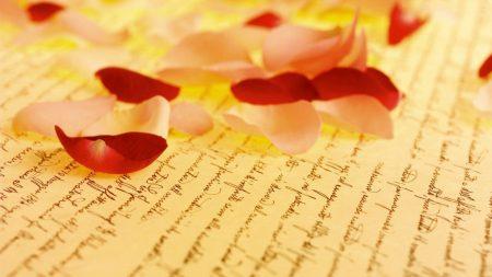 petals, rose, paper