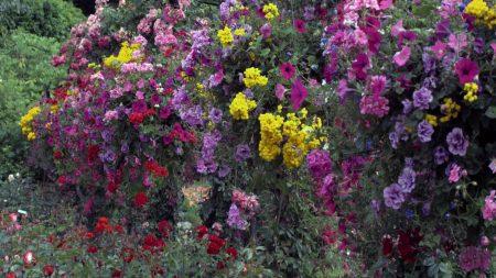 petunia, flowers, greenery