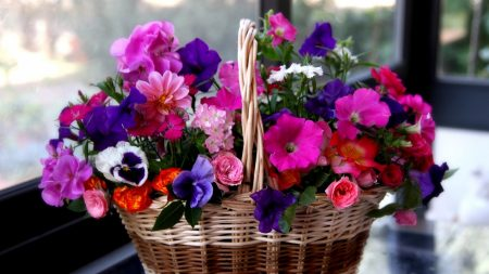 petunia, pansies, geraniums