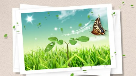 photography, butterfly, clipart