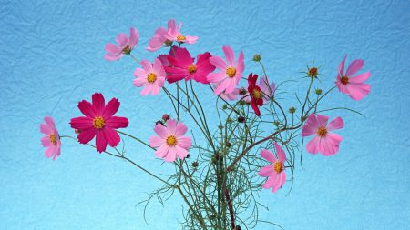 pink, petals, spring