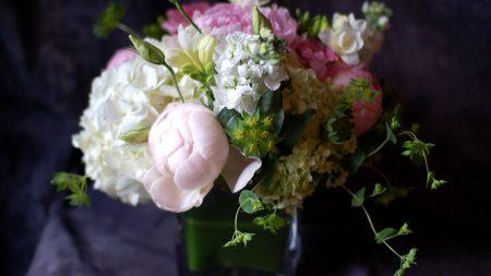 pion, gillyflower, hydrangea