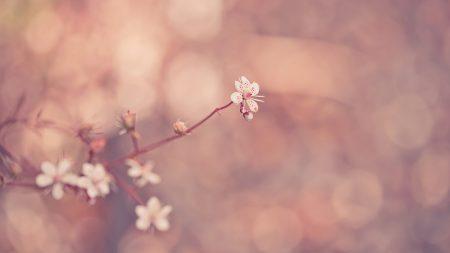 plant, branch, glare