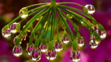 plant, drops, dew