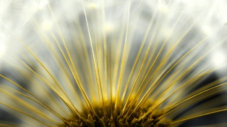 plant, symmetry, size