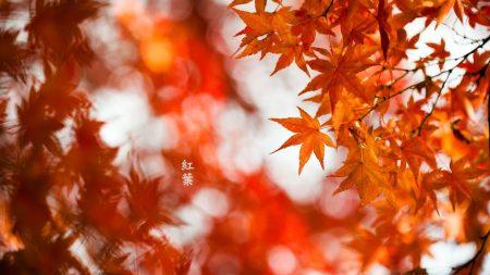 plants, autumn, nature