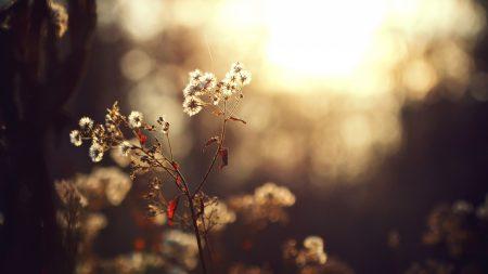 plants, light, branch