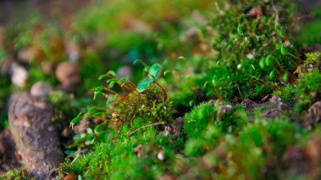 plants, moss, close-up