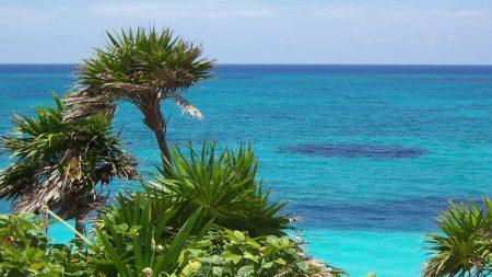 plants, tropics, coast