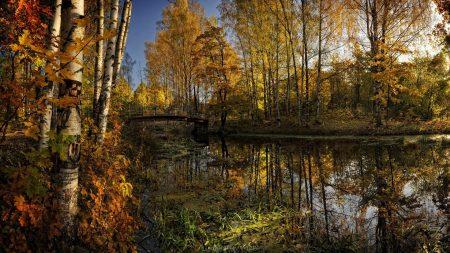 pond, bridge, autumn