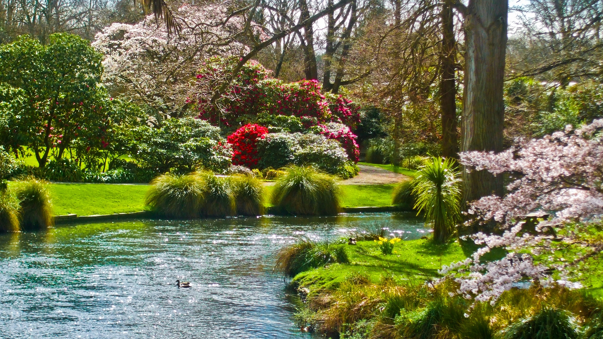 Earnings Disclaimer >> Download Wallpaper 1920x1080 pond, flowers, grass, nature ...