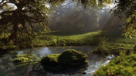 pond, forest, trees