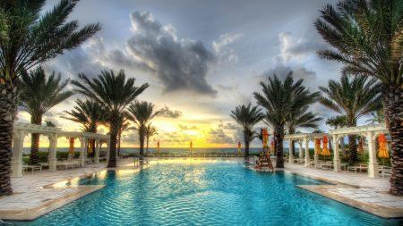 pool, palm trees, resort