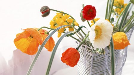 poppies, daffodils, flowers