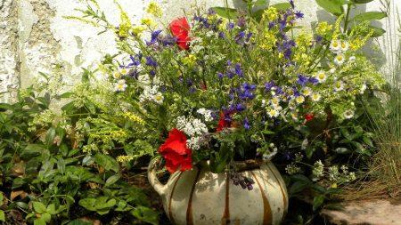 poppies, daisies, flowers