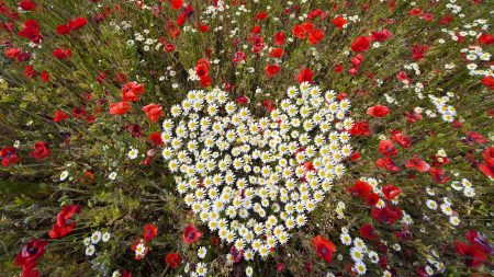 poppies, daisies, hearts