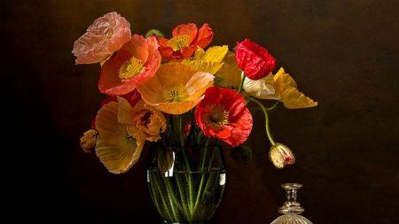 poppies, flower, vase