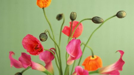 poppies, flowers, bouquet