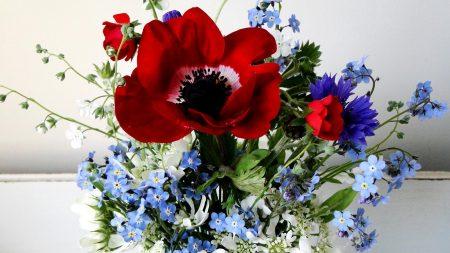 poppy, forget-me, cornflower