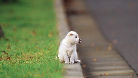 puppy, baby, sitting