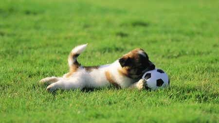 puppy, ball, biting