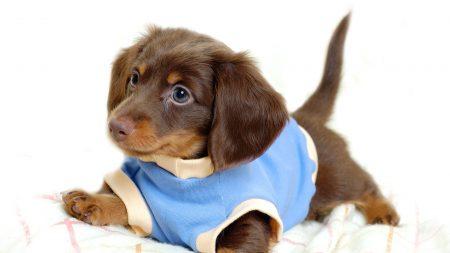 puppy, dog, costume