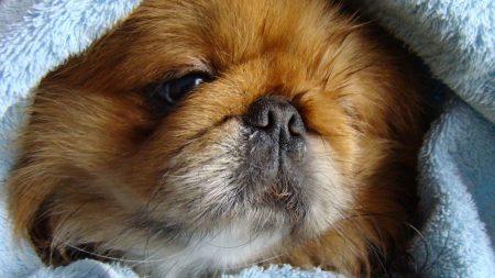 puppy, dog, fluffy