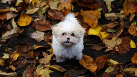 puppy, furry, dirt