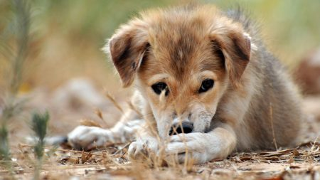 puppy, grass, lie down