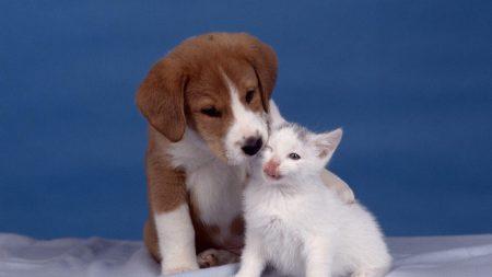 puppy, kitten, care