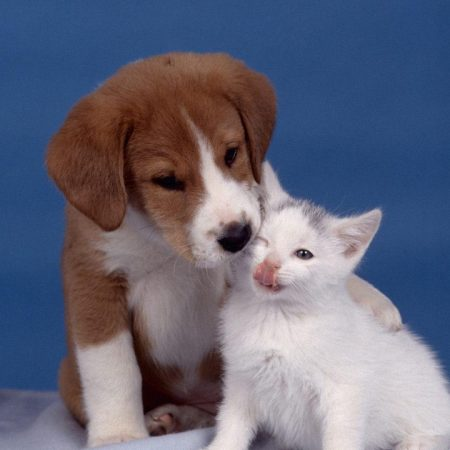 puppy, kitten, care