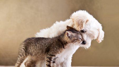 puppy, kitten, friends