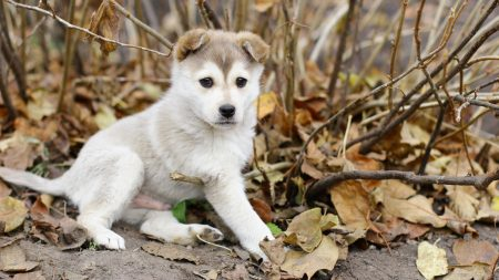 puppy, leaves, autumn