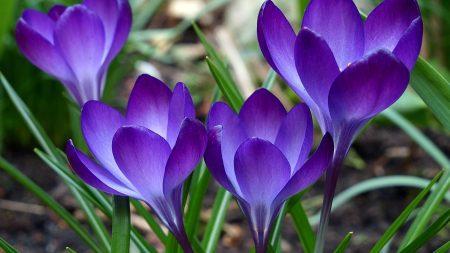 purple, green, flowers
