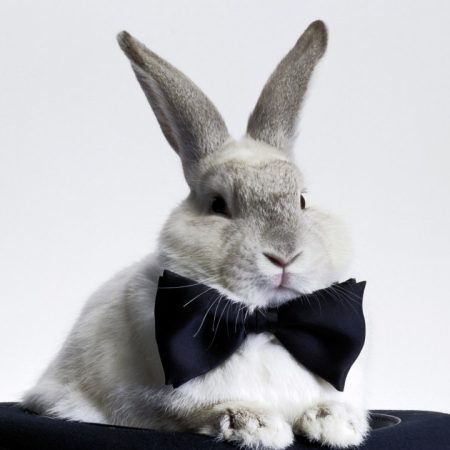rabbit, bow, hat