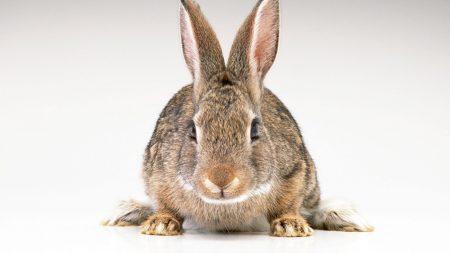 rabbit, ears, striped