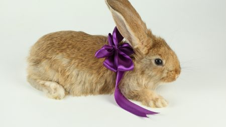 rabbit, easter, new year