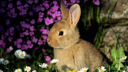 rabbit, flowers, baby