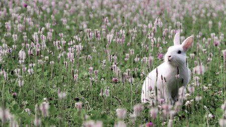 rabbit, grass, flowers