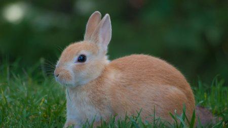 rabbit, grass, waiting