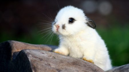 rabbit, spotted, cute