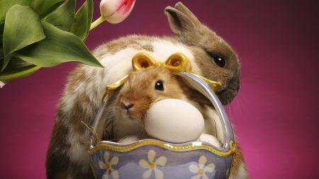rabbit, vase, flower