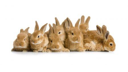 rabbits, a lot, nice