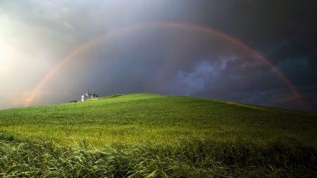 rainbow, field, meadow