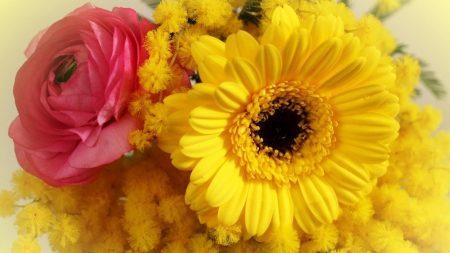 ranunkulyus, gerbera, mimosa