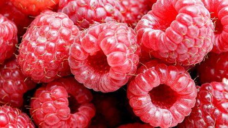 raspberry, berry, fresh