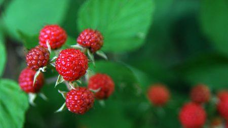 raspberry, berry, red