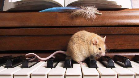 rat, piano, notes