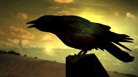 raven, shadow, bird